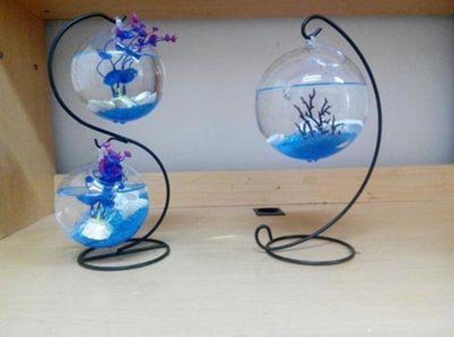 Bể cá để bàn