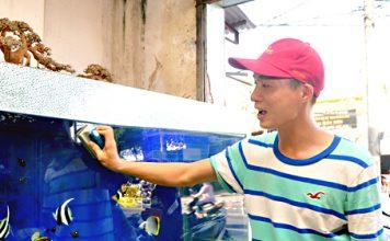 Chăm sóc bể cá nước mặn