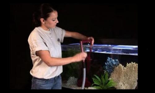 Vệ sinh bể cá tại nhà