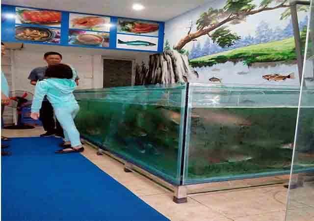 Bể thả cá hồi