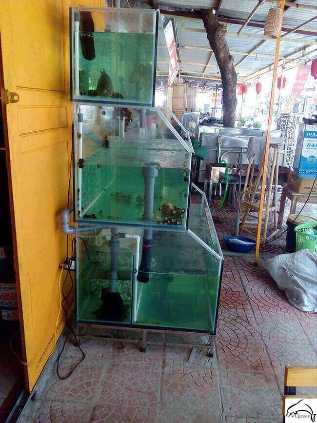 Dàn bể hải sản kính trồng kính