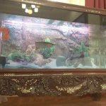 Bể cá rồng chân quỳ