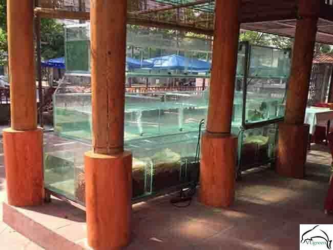 Dàn bể hải sản nhà hàng