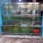 Bể chứa hải sản