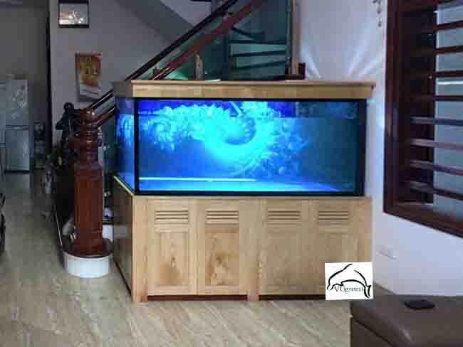 Làm bể cá rồng