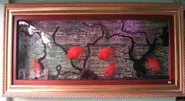 Bể cá ốp tường