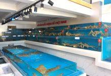 Bể nuôi hải sản