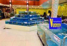 Bể hải sản giật cấp kim tự tháp